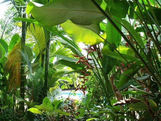 Phu Pha Ao Nang Resort and Spa: tropical greenery