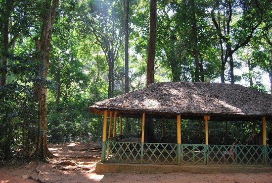 Vagamon Heights: Thankakanam Estate: In the forest