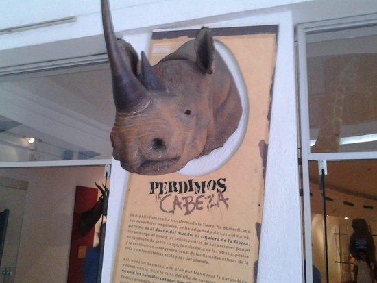 Museo de Ciencias Naturales: rinoceronte