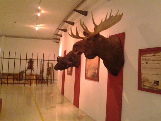 Museo de Ciencias Naturales: cuernos