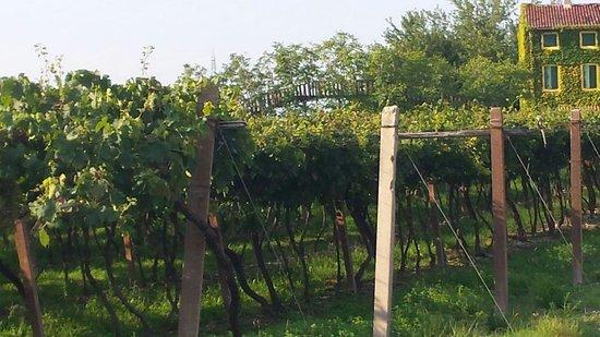 B&B Bosco del Gal : Scorcio vitigni