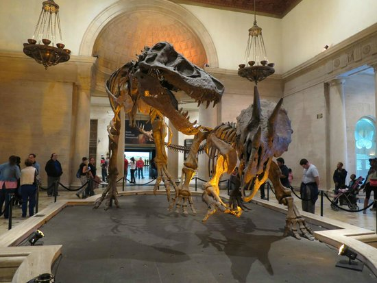 Dinosaur Hall - Picture of Natural History Museum of Los ...