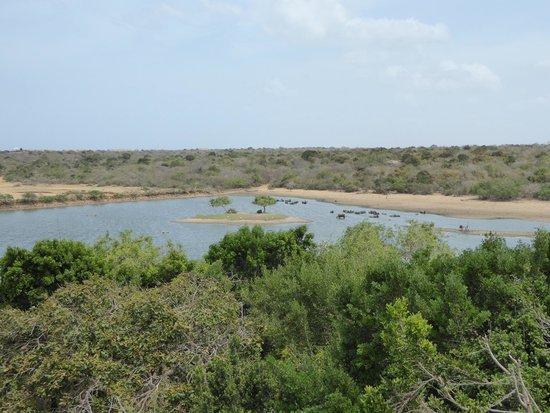 Cinnamon Wild Yala: The local watering hole