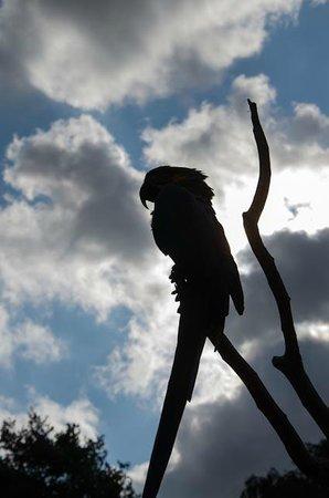 Tropical Birdland: Sillouette