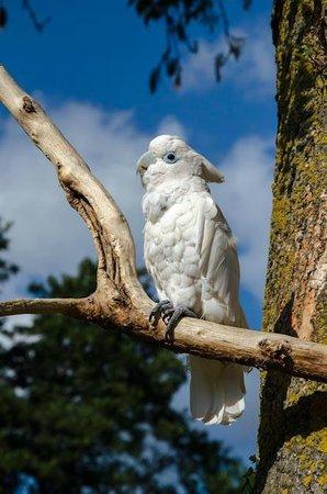 Tropical Birdland: Old blue eyes
