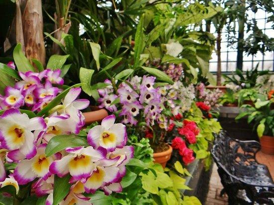 Biltmore Estate: Beautiful flowers in the gardens