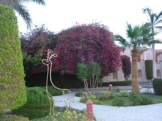 Ali Baba Palace : the garden