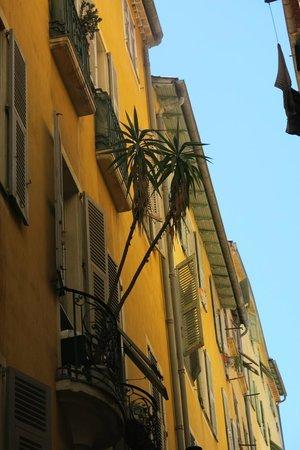 Old Town (Vieille Ville): palmier sur un balcon