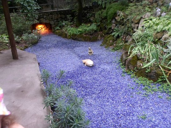 Giardini La Mortella: particolare del giardino