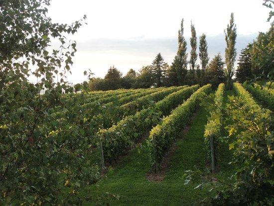 Olde Lantern Inn and Vineyard: Overlooking the vineyards