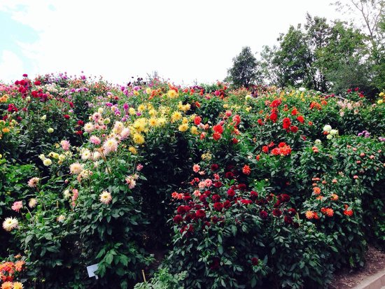 Trauttmansdorff Castle Gardens : Giardino fiorito