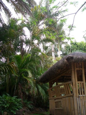 Byron Beach Resort: garden
