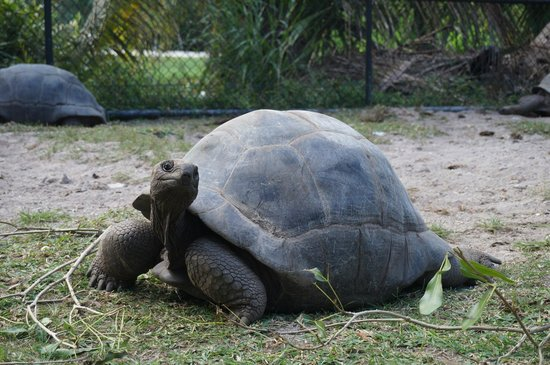 Kempinski Seychelles Resort: The hotel owns few turtles (the oldest is 150 yo!)