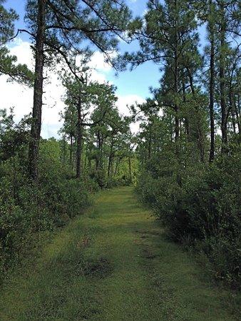 Hontoon Island State Park: Green Grassy Pathway Hontoon Island