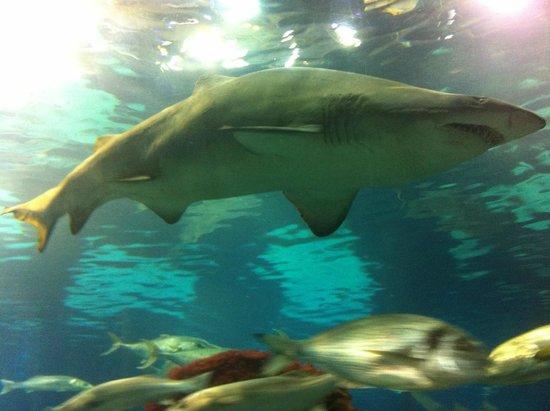 L'Aquarium de Barcelona : squalo nel tunnel