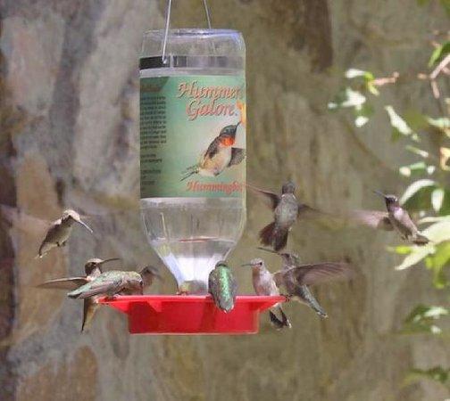 Ramsey Canyon Inn Bed and Breakfast : Hummingbirds at Ramsey Canyon Inn