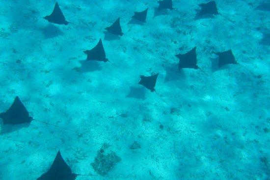 Bora Bora Pearl Beach Resort & Spa: À l'autre bout de l'île avec FanFan Taxi Boat