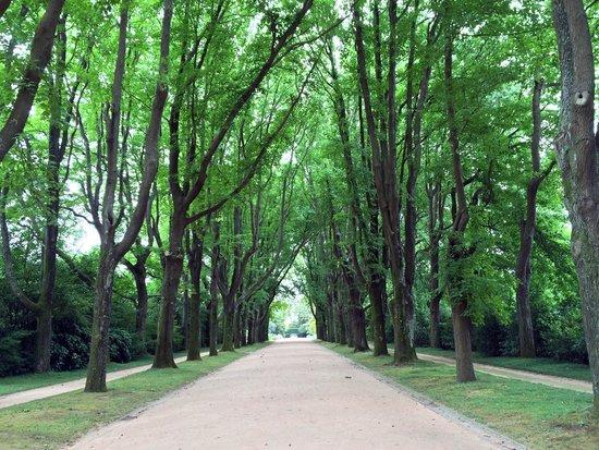 Un viale del Parco de Serralves