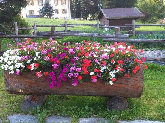 Hotel Flora Alpina : Flores por doquier