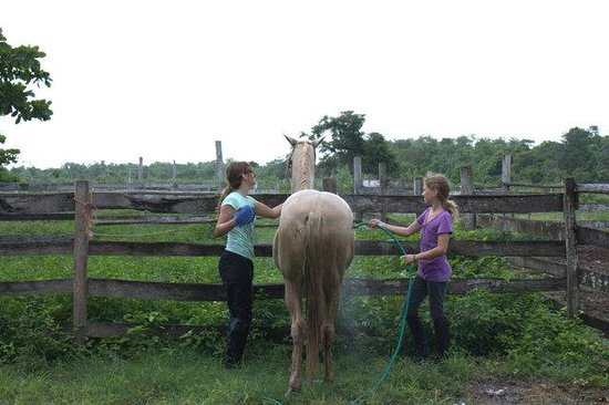 Num Ka'an Ranch: girls washing horses down after the ride