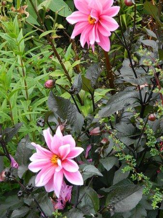 Exbury Gardens & Steam Railway : Late summer blooms