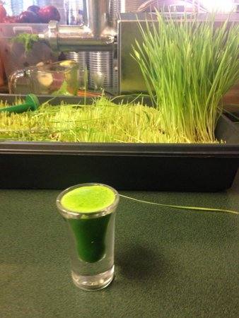 The Urban Frog: Fresh squeezed WHEATGRASS! they grow their own!  $2. A shot of instant enzyme energized nutrient