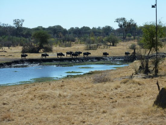The Hide : Water hole from the terrace