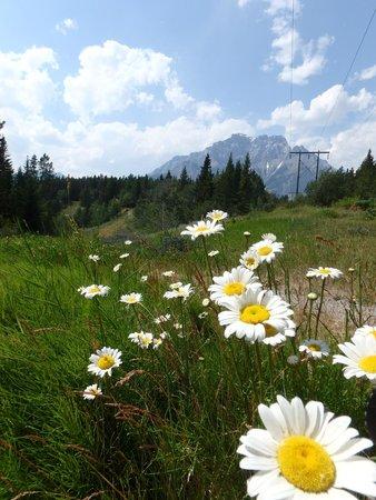 Tunnel Mountain Village II Campground: Flowers