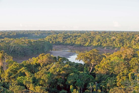 Posada Amazonas : View of the Tambopata river from local viewing tower