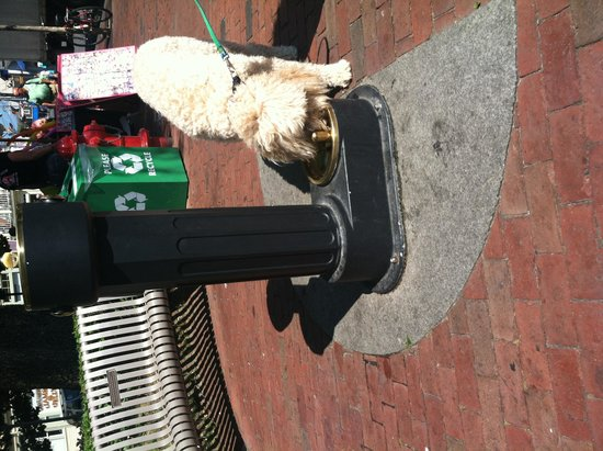 Commercial Street : Doggie drinking fountain in front of Town Hall