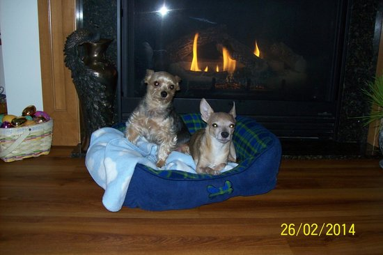 Days Inn Bismarck : My dogs, Duncan and LaPin.