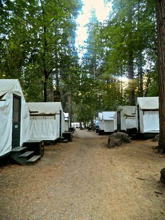 Yosemite Valley Curry Village Tent Cabins & Curry Village Tent Cabins - Picture of Yosemite Valley Yosemite ...