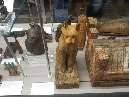 Musée égyptologique de Turin : Cat mummy container