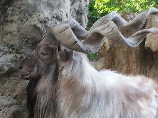 Giardino Zoologico di Pistoia : Che corna!!!