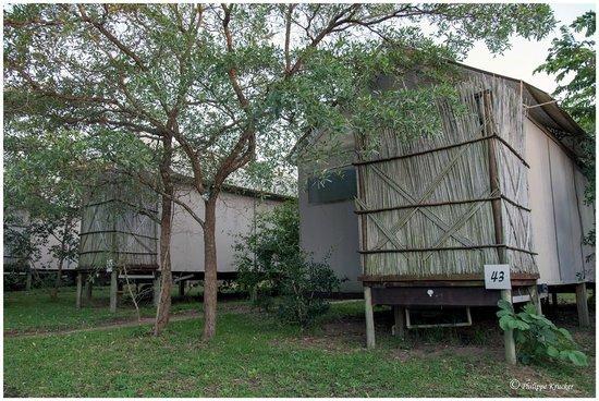 Nkambeni Safari Camp : SAFARI LODGE