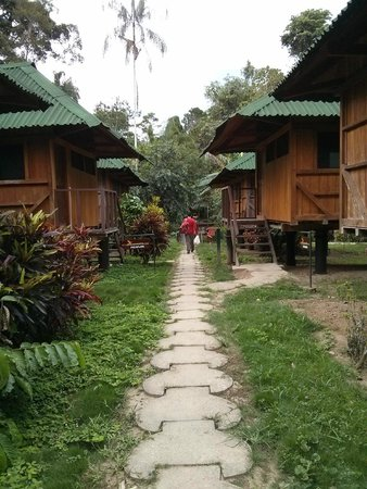 Ecoamaziona Lodge : More Lodges