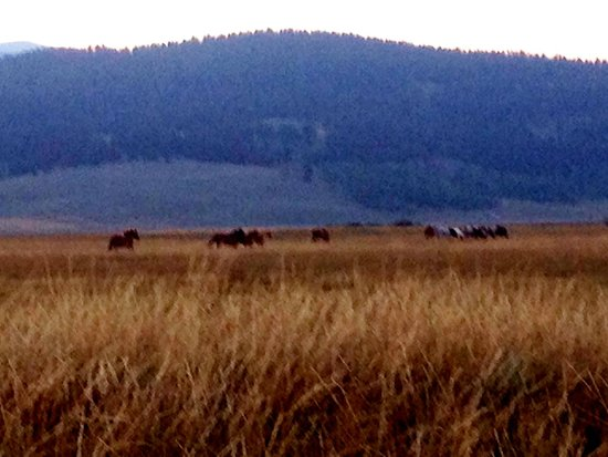 Yellowstone Under Canvas : Horses