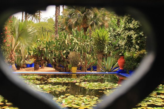 Jardin Majorelle : lily pon