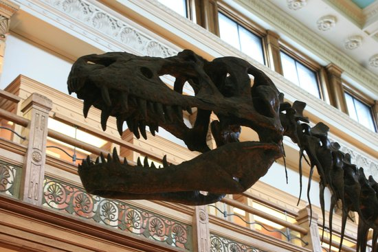 Musee Redpath : A big dinosaur skeleton is a must for old-school museums and this Gorgosaurus fits the bill.
