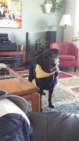 Residence Inn Portland Downtown/RiverPlace : Dog friendly