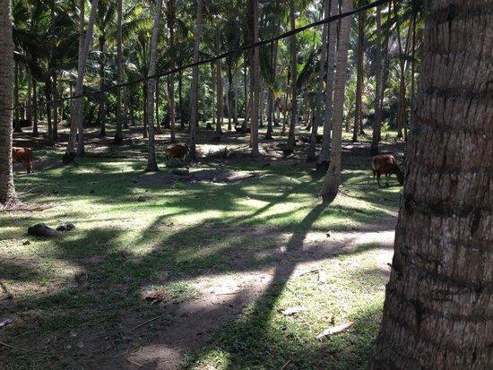 Villa Matanai: Surrounds