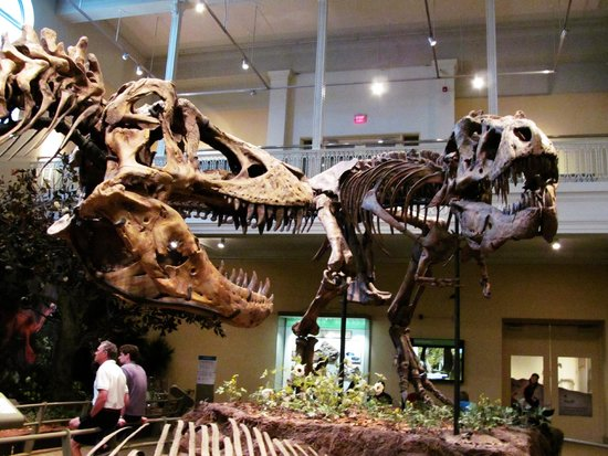 Carnegie Museum of Natural History : T-Rex