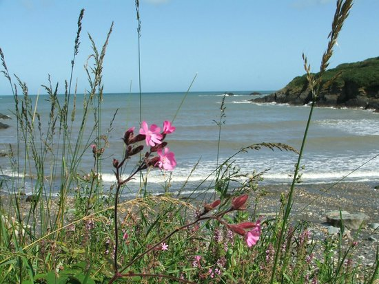 Aber Bach 20 min walk from Glan House