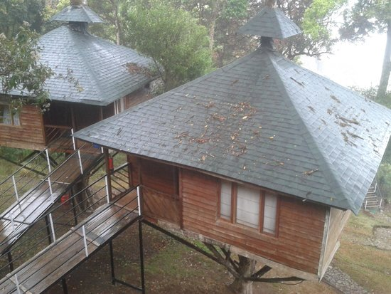 Nature Zone Resort: view from tree house