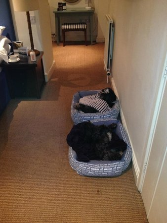 Hare and Hounds Hotel: Our boys relaxing in their beds