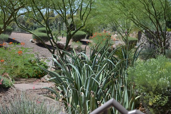Phoenix Marriott Tempe at The Buttes : Beautiful!