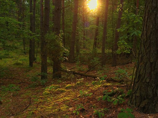 Wrzelowiec Landscape Park