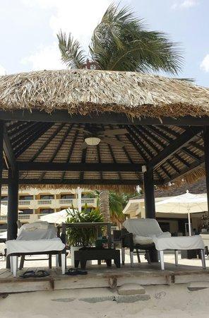 Bucuti & Tara Beach Resort Aruba: Our Palapa