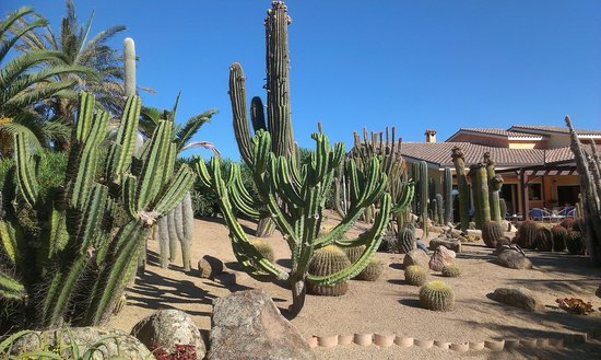 Lantana Resort, Hotel & Apartments : Cactus garden