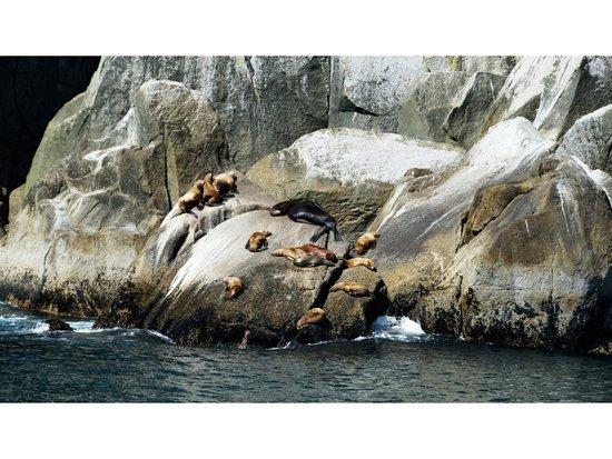 Kenai Fjords National Park: Peace of sea lions
